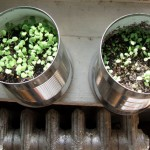 Water, sun & watch green grow!!