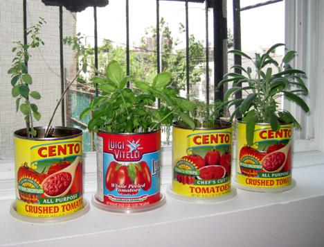 tomato can herb garden