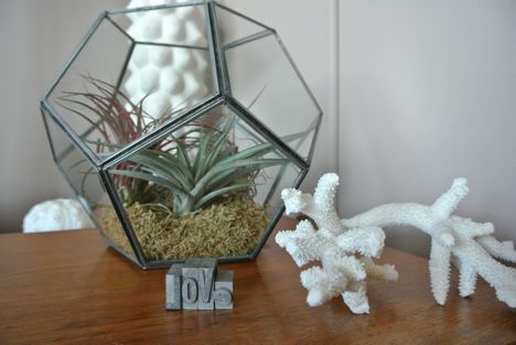 easy air plant terrarium via craftawl.com