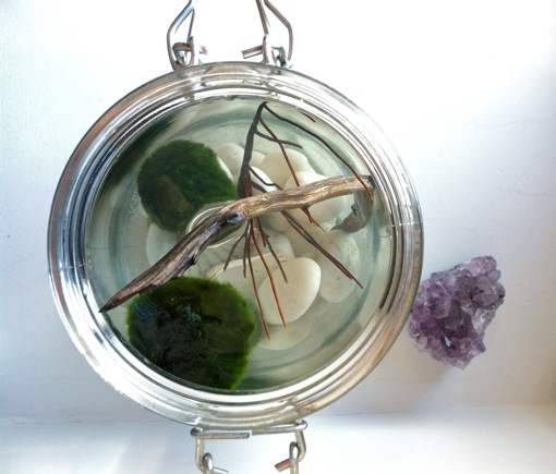 how to create an aquatic habitat for a marimo moss ball