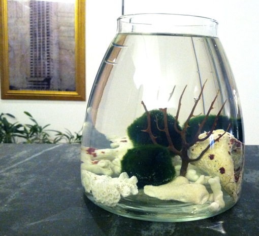 aquatic habitat for Marimo ball